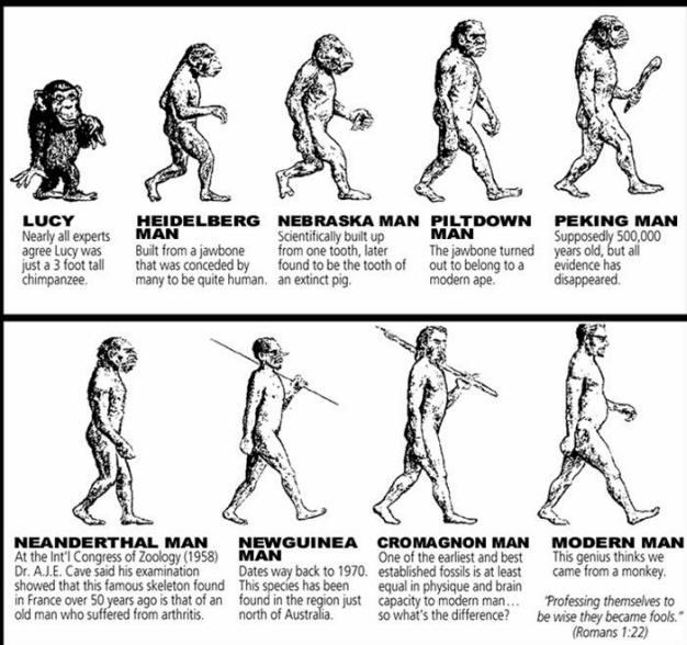 Human-Evolution-Chart
