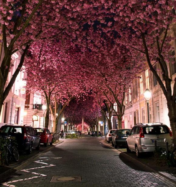 voglia-di-primavera-10-dei-viali-alberati-piu-belli-del-mondo-10
