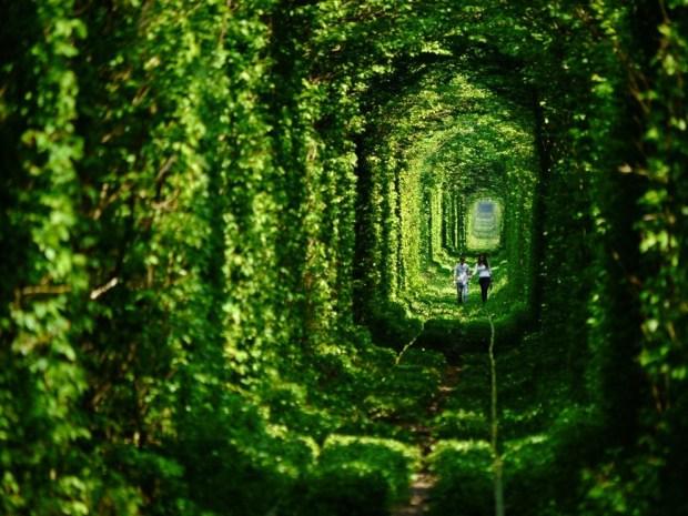 voglia-di-primavera-10-dei-viali-alberati-piu-belli-del-mondo-3
