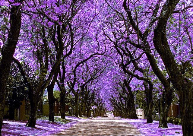 voglia-di-primavera-10-dei-viali-alberati-piu-belli-del-mondo-4