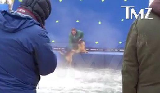 """Parte il boicottaggio di """"Qua la zampa!"""": la PETA denuncia il maltrattamento di un cane nella pellicola"""
