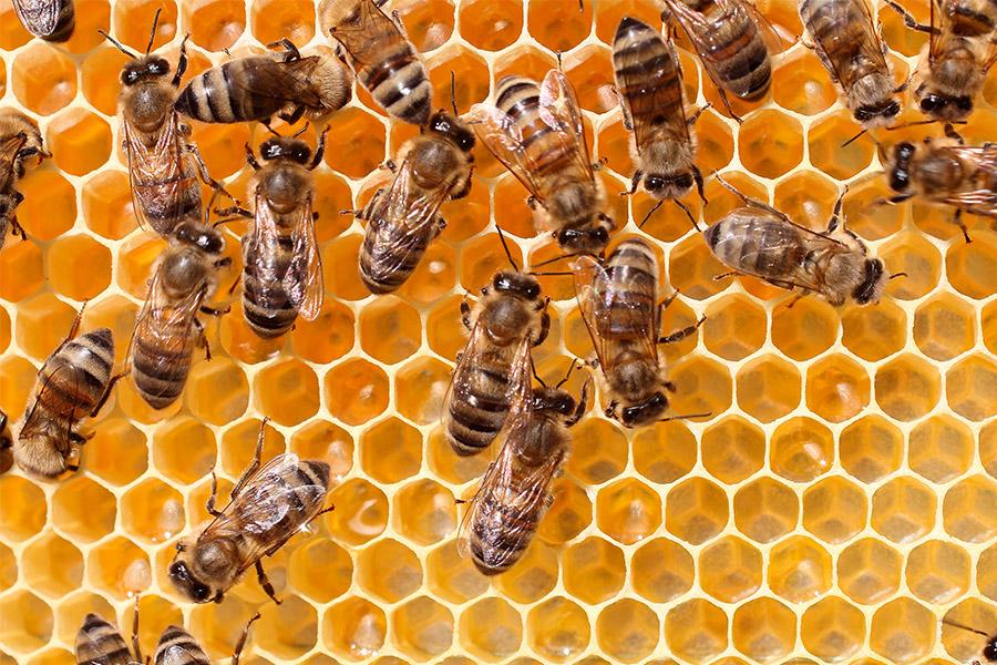 gli-insetticidi-neonicotinoidi-le-api-la-petizione-di-greenpeace
