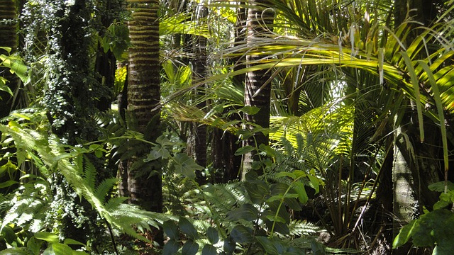 Leonardo Di Caprio stanzia 5 milioni di dollari per l'Amazzonia